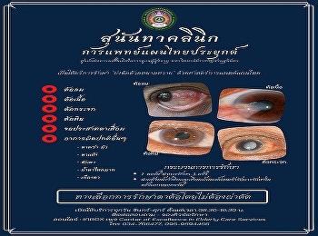 บ่งต้อด้วยหนามหวาย หัตถการทางแพทย์แผนไทยที่ใช้รักษา บรรเทาอาการตาต้อ